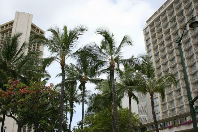 ハワイのトロリーバスからの景色