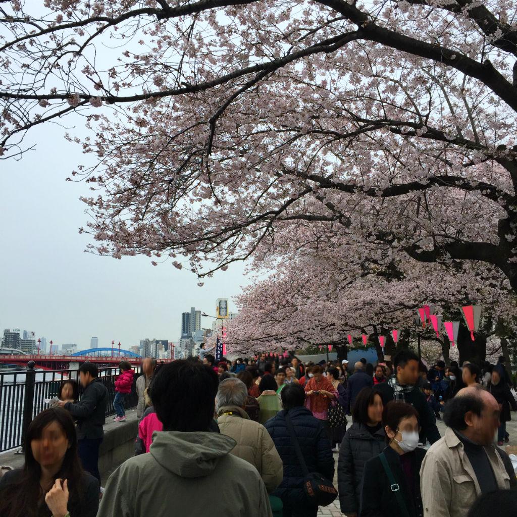 東京観光:隅田川の桜