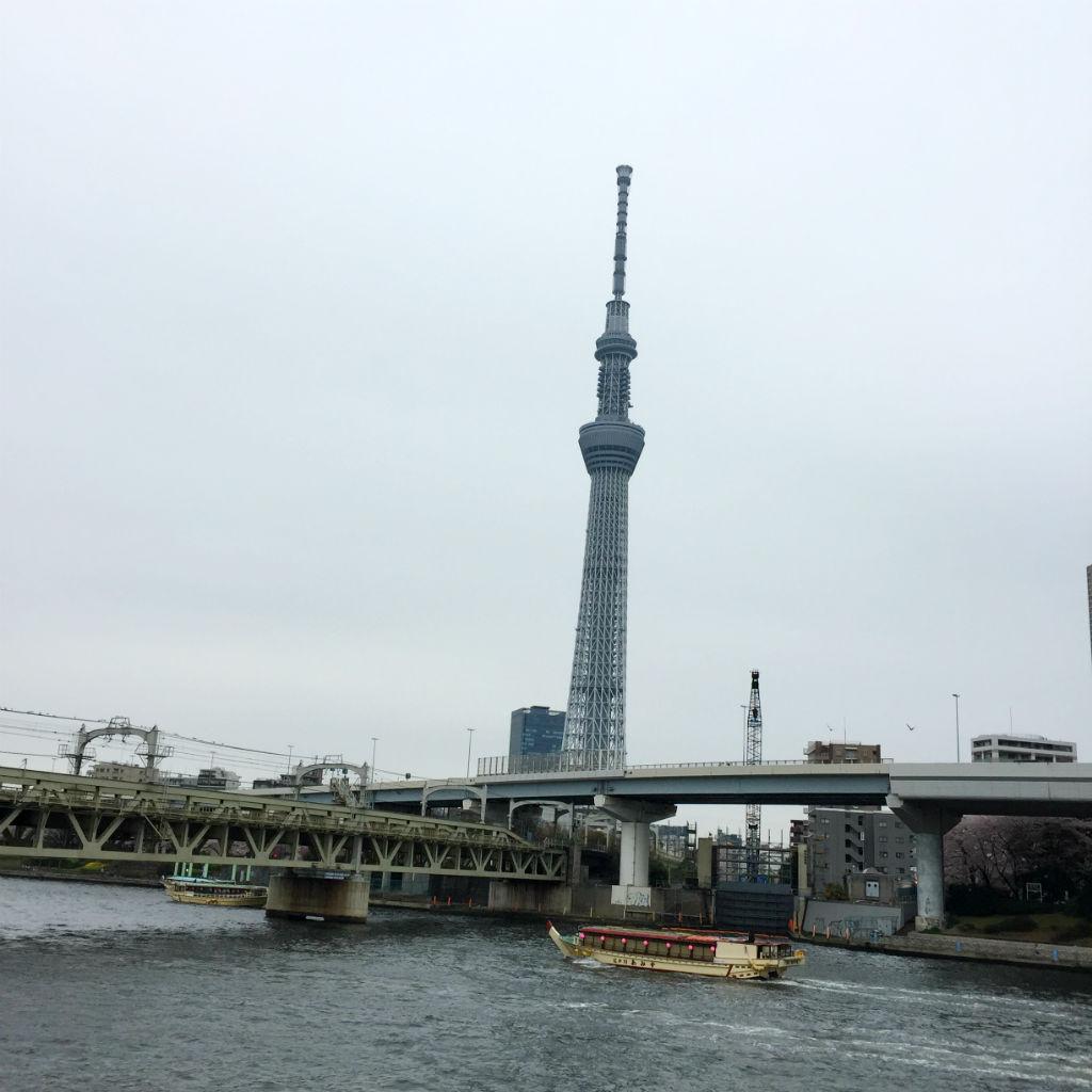 東京観光:隅田川から見たスカイツリー