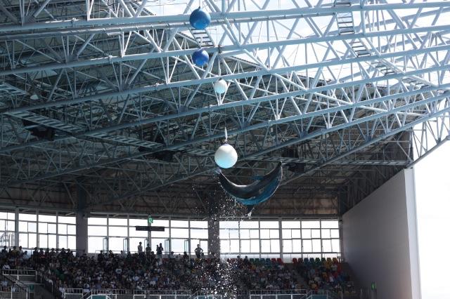 ジャンプしてボールを蹴るアドベンチャーワールドのイルカ