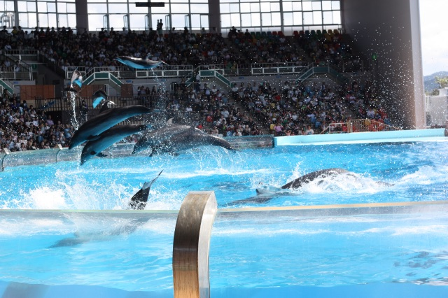 いっせいに跳ぶアドベンチャーワールドのイルカ
